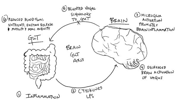 Brain gut axis